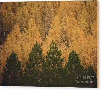 Pine Trees Wood Print by Tim Hester