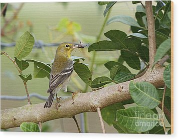 Pine Warbler With Lunch Wood Print by Jennifer Zelik