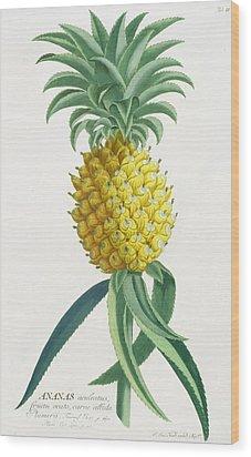 Pineapple Engraved By Johann Jakob Haid Wood Print by German School