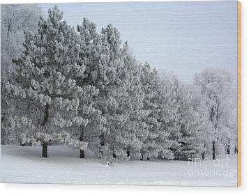 Pines In The Winter Wood Print