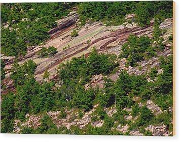 Pink Acadia 8103 Wood Print by Brent L Ander