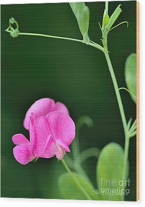 Pink And Green Wood Print