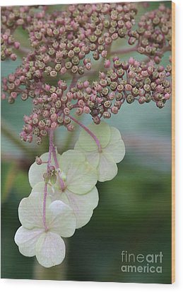 Pink And Green Hydrangea Closeup Wood Print by Carol Groenen