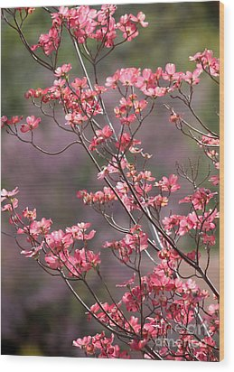 Pink And Purple Spring Trees Wood Print by Carol Groenen