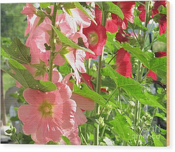 Pink And Red Group Wood Print