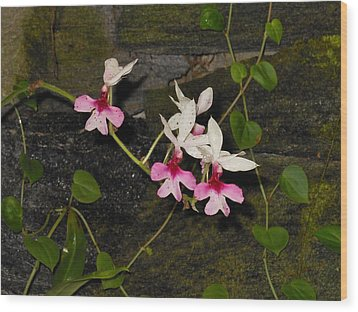 Pink And White Orchids Wood Print