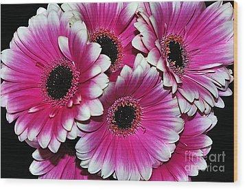 Pink And White Ornamental Gerberas Wood Print by Kaye Menner