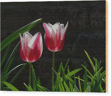 Pink And White Tulip Wood Print