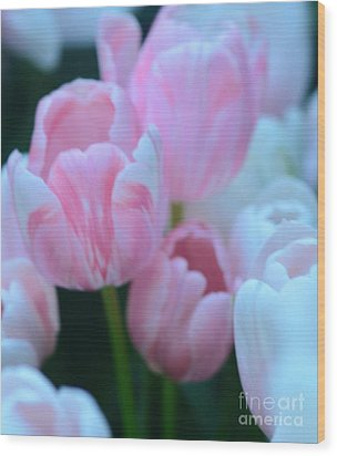 Pink And White Tulips Wood Print by Kathleen Struckle