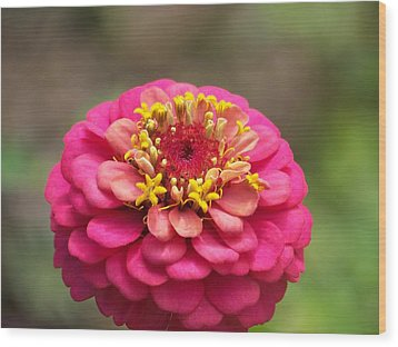 Wood Print featuring the photograph Pink Floral  by Eunice Miller