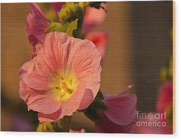 Wood Print featuring the photograph Pink And Yellow Hollyhock by Sue Smith