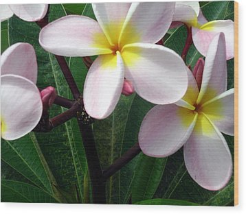 Wood Print featuring the photograph Pink And Yellow Plumeria by Karen Nicholson