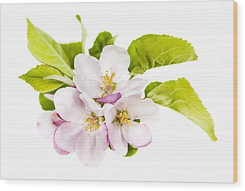 Pink Apple Blossoms Wood Print by Elena Elisseeva