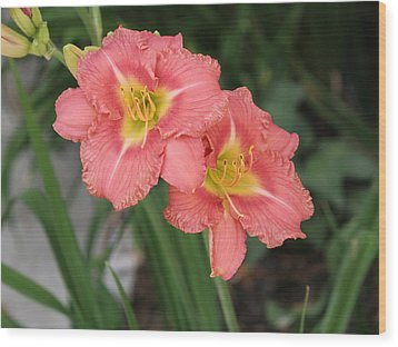 Pink Asiatic Lily Wood Print by Allan Levin