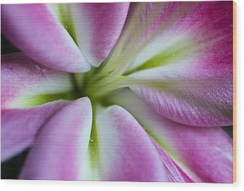 Pink Asiatic Lily Wood Print by Julie Andel
