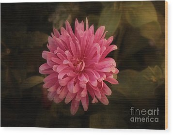 Wood Print featuring the photograph Pink Aster by Marjorie Imbeau