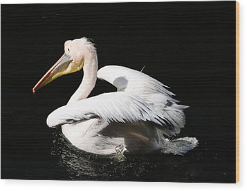 Pink Backed Pelican Wood Print by Bonnie Fink
