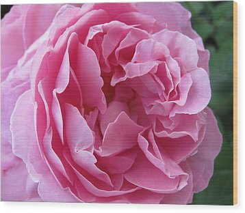 Wood Print featuring the photograph Pink Beauty by Pema Hou