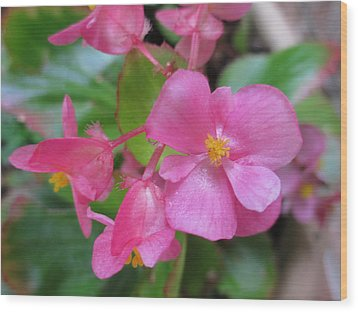 Pink Begonias Wood Print by Barbara Yearty