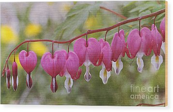 Pink Bleeding Hearts Wood Print