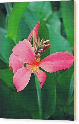 Pink Bloom Wood Print by Cathie Tyler