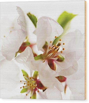 Pink Blossom Wood Print by Elena Elisseeva