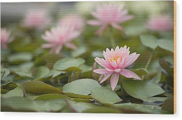 Pink Blossom  Wood Print by Joey  Maganini