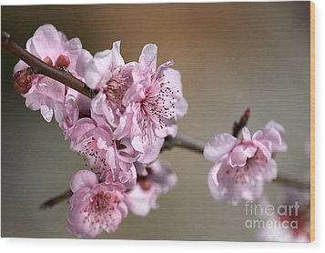 Pink Blossom Wood Print by Joy Watson