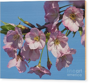 Pink Blossoms-3 Wood Print