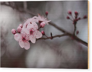 Pink Blossoms Wood Print by Michelle Wrighton