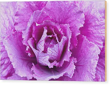 Pink Cabbage Wood Print by Crystal Hoeveler