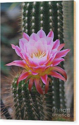 Pink Cactus Flower Wood Print by Nancy Mueller