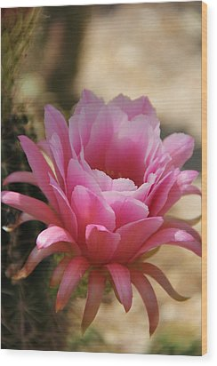 Wood Print featuring the photograph Pink Cactus by Tammy Espino