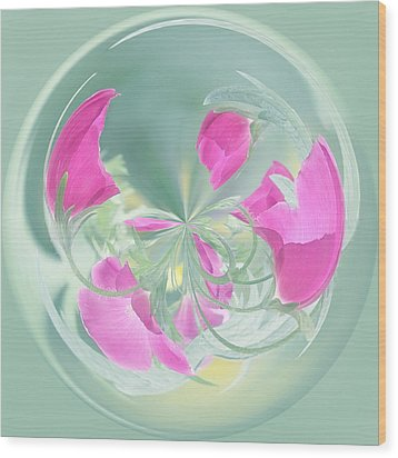 Pink California Poppy Orb Wood Print by Kim Hojnacki