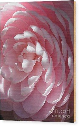 Pink Camellia Closeup Wood Print by Carol Groenen