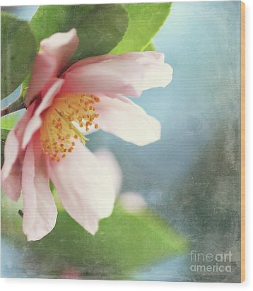 Pink Camellia Wood Print by Sylvia Cook