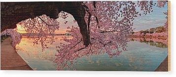 Pink Cherry Blossom Sunrise Wood Print