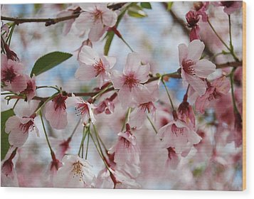 Pink Cherry Blossoms Wood Print by Jocelyn Friis