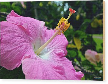 Wood Print featuring the photograph Pink Chinese Hibiscus Flower by Aloha Art
