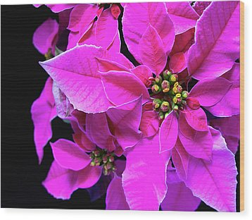 Pink Christmas Wood Print by Charles Lupica