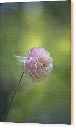 Pink Columbine Wood Print by  Andrea Lazar