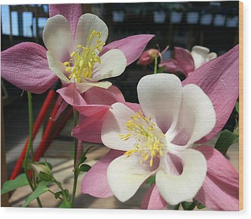 Wood Print featuring the photograph Pink Columbine by Caryl J Bohn