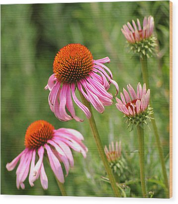Pink Cone Flower Wood Print by Art Block Collections