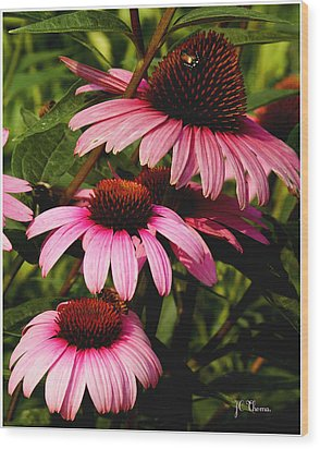 Wood Print featuring the photograph Pink Coneflowers by James C Thomas