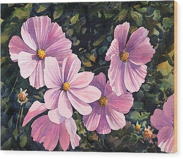 Pink Cosmos Wood Print by Anthony Forster