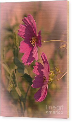 Wood Print featuring the photograph Pink Cosmos  by Marjorie Imbeau