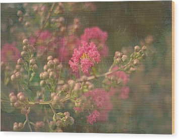 Pink Crepe Myrtle Wood Print by Suzanne Powers