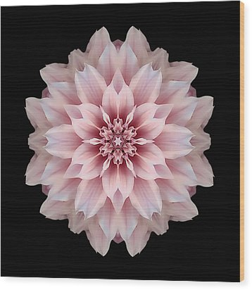 Pink Dahlia Flower Mandala Wood Print by David J Bookbinder