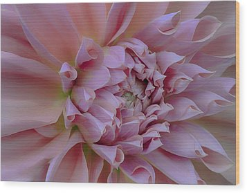 Wood Print featuring the photograph Pink Dahlia by Jacqui Boonstra