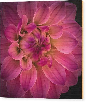 Pink Dahlia Wood Print by Linda Villers